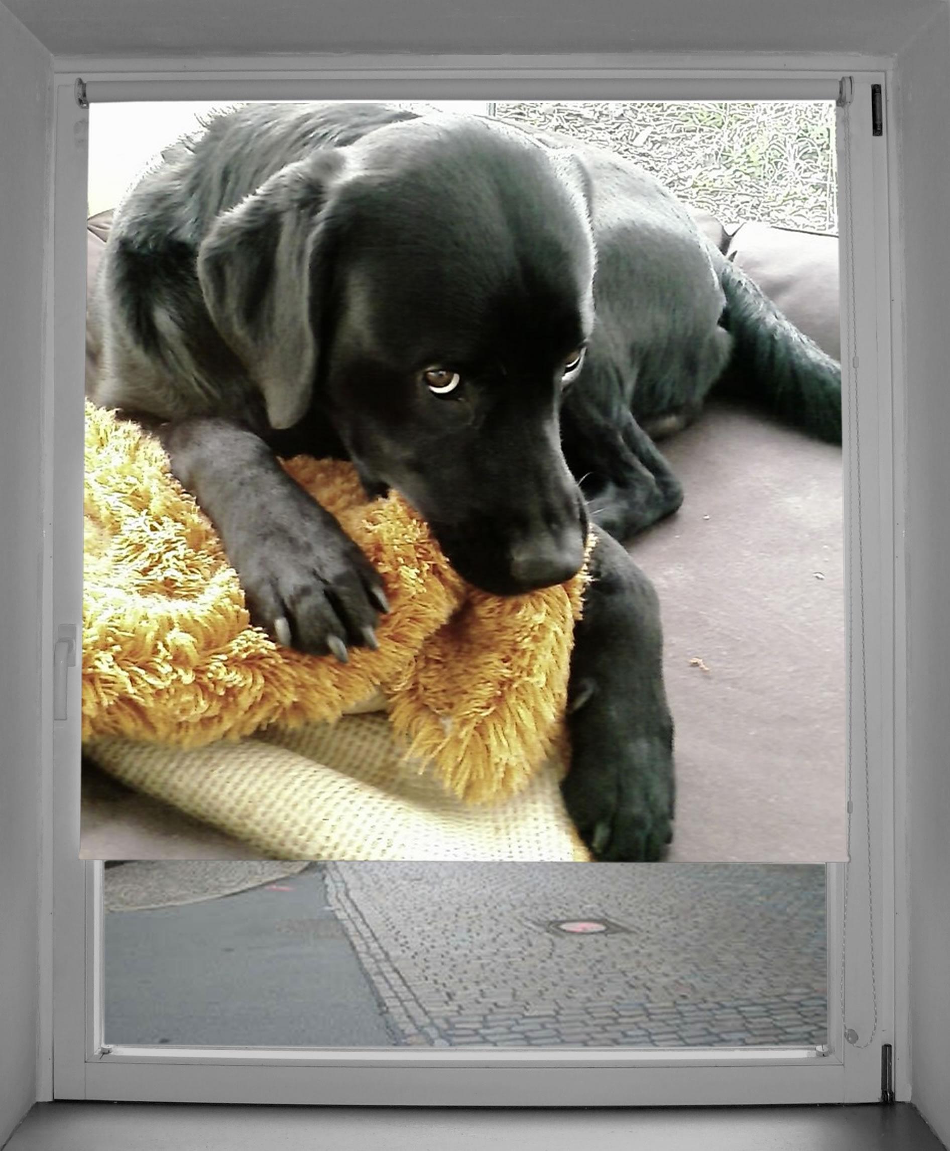 Fotorollo mit eigenem Hund