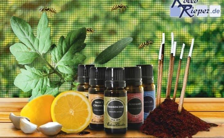 Was hilft am besten gegen Wespen? Einfache Hausmittel oder professioneller Insektenschutz?